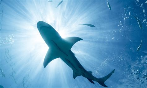 Can wearing magnets really repel sharks?   HowStuffWorks