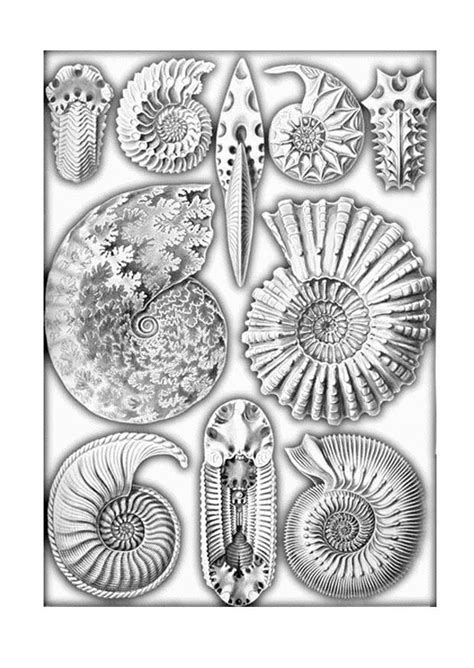 Coloring Page fossils - free printable coloring pages