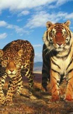 Leopard and Tiger, Vampires and Werewolfes - Andy - Wattpad