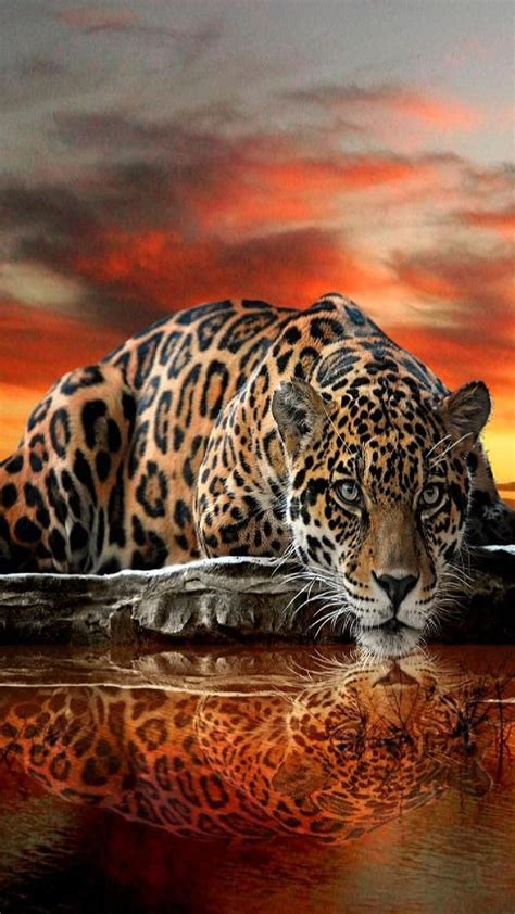 Download thirsty leopard Wallpaper by georgekev - 7d