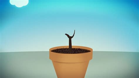 A Cash Plant Growing, Concept Stock Footage Video (100%